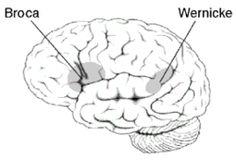 Brocas område – Wikipedia