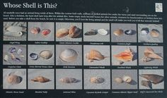 Scavenger hunt idea for kids (and me)--who can find the most different types of shells? The smallest shell? Biggest shell?