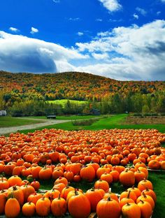 Fall setting in Jericho #Vermont by Scott Levy.