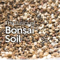 The Basics of Bonsai Soil For many bonsai enthusiasts, their first tree came from a big box store, m Buy Bonsai Tree, Bonsai Tree Types, Bonsai Tree Care, Bonsai Trees, Bonsai Soil, Bonsai Garden, Garden Plants, House Plants, Succulents Garden