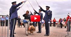 For 10 Years, The Rescue Dogs Of 9/11 Didn't Get The Recognition They Deserved. But This Moving Ceremony Changed That | The Animal Rescue Site Blog