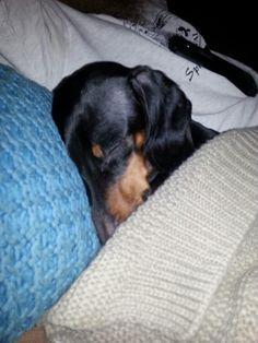 Sleepy weenie