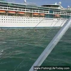 JUST IN CASE YOU WERE INTERESTED! Key West Harbor on a Thursday afternoon...... https://www.facebook.com/fishmonstermagazine/videos/10154354529610419/