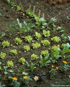 Growing Spring vegetables such as peas, beets, radishes and spinach!