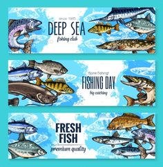 Sealife banners of deep sea or ocean fishes for fishing trip. Vector set of fresh trout, salmon or mackerel and marlin, flounder o