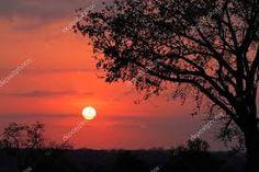 Afbeeldingsresultaat voor savanne