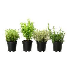 ÖRTIG - IKEA - herbs!