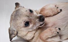 NATIONAL DOG DAY | Rescue a new best friend! | Sierra Magazine