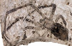 The biggest known fossil spider has been found in China, a new study says. Measuring nearly 1 inch (2.5 centimeters) in length, the 165-million-year-old fossil was uncovered in 2005 by farmers in Inner Mongolia.