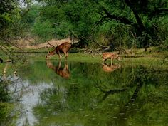 bharatpur national park in india