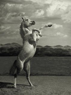 Amazing Horses Photos. This images just does it for us. Something about Black and White photography that captures the moment so beautifully.