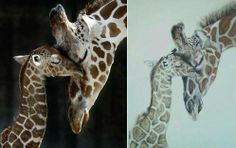 Giraffe commissioned and painted in 2012. Painted in soft pastels and acrylic paints (approx 12 colours)