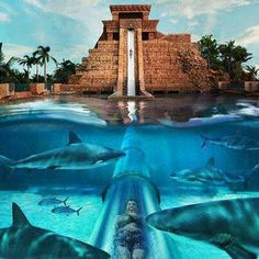 Shark slide...Atlantis Resort, Paradise Island, Bahamas