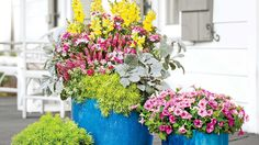 A Quick Container Combo - 121 Container Gardening Ideas - Southern Living - In the largest pot, working from back to front and tallest to shortest, densely plant 'Liberty Classic Yellow' snap-dragon, 'Bouquet Rose Magic' dianthus, and 'Tickled Pink' veronica. Place 'New Look' dusty miller and 'Lemon Ball' sedum in the front to trail over the edge. Pack a powerful, single-note punch in the two smaller pots by planting 'Supertunia Vista Bubblegum' petunia in the midsize containe...
