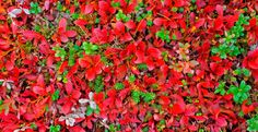 Autumnal plant carpet in Lapland, Finland / ©gadagj/Getty Images/iStockphoto Lapland Holidays, Autumn Scenery, Midnight Sun, Aurora Borealis, Lonely Planet, Four Seasons, Northern Lights, Places To Visit, Around The Worlds