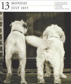 Bev Hollis Photography » The Art of Pet Photography