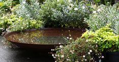 Corten Steel Water Bowl Gavin Jones used our Corten Steel Waterbowl in their garden design project. Mini Pool, Bird Bath Garden, Water Garden, Water Features In The Garden, Garden Features, Amazing Gardens, Beautiful Gardens, Water Trough, Low Maintenance Garden
