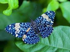 Resultado de imagem para borboletas