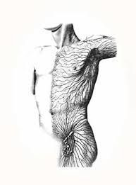 Inguinal Nodes and Vessels of the Torso