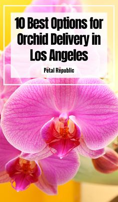 Welcome to our local guide to the best orchid delivery services in Los Angeles. Here you'll find our favorite homegrown orchid nurseries, boutique floristry studios in addition to affordable and fast options for orchid delivery throughout Greater Los Angeles and Orange Country. What's more, many provide same-day orchid delivery throughout the city 7-days a week! Orchid Nursery, Plant Nursery, Elegant Flowers, Amazing Flowers, Flowers For Each Month, House Plant Delivery, Orange Country, Flower Subscription