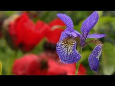 Gardeners' World 2014 Episode 12