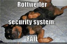 Cute Rottweiler Pictures Funny #rottweilernames