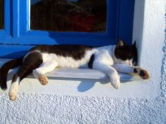 """""""The real measure of a day's heat is the length of a sleeping cat."""" --Charles J Brady"""