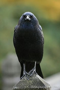 And a crow .. just because