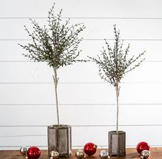 Myrtle Tree | Christmas Decor | Magnolia Christmas | Magnolia Market | Chip & Joanna Gaines | Waco, TX |