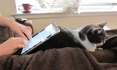 An unusual iPad bed stand -- works prrrfectly until kitty gets bored