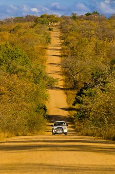 Tourists on safari driving down a long dirt road in Kruger National Park, South Africa