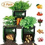 My 2020 Pandemic Victory Garden Vegetable Planters, Container Gardening Vegetables, Container Plants, Vegetable Garden, Plant Bags, Sprouting Seeds, Pepper Plants, Victory Garden