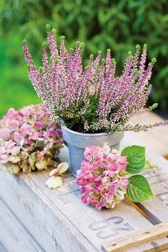 PLANTAS Y FLORES BREZO DECORACION Vicky's Home: Decora con Brezo / Decorate with Heather flower