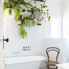 Absolutely love this bathroom shot. A green canopy above the bath! Image credit: Hannah Puechmarin via @apartmenttherapy #plants #houseplants #botanical #hangingplants #interiordesign #interiors #interiorstyle #interiorstyling #interiorinspo #homedecor #homestyle #homedesign #homestyling #interiorsblogger #interiorsblog #homeblog #homeblogger #inspo #interier #myhomevibe #2018style #2018interiors
