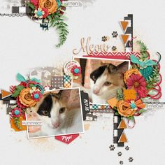 Stacks On Stacks 3 by Miss Fish Templates Fish Template, Cat Sketch, Scrapbook Templates, Digital Scrapbooking, Dog Cat, Kitten, Invitations, Pets, Creative