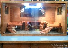 Bearded Dragon . org • View topic - My new 4x2x2 Birch/Pine Viv ...