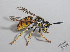 Bee Drawing, 3d Art Drawing, 3d Drawings, Realistic Drawings, Colorful Drawings, Animal Drawings, Drawing Ideas, Mago Tattoo, Insect Art