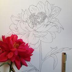 Flowers in Progress: ink drawings by Scientific Illustrator and artist Noel Badges Pugh.