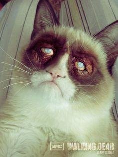 Grumpy Cat Zombie