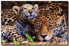 I love you Mom (Maya and Mom at Palm Beach Zoo, West Palm Beach)