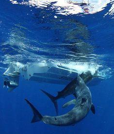 Footage of 660-lb Mako Shark Attacking Marlin Caught on Camera