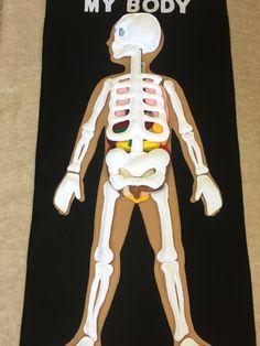 Fieltro de cuerpo humano órganos humanos y esqueleto mi