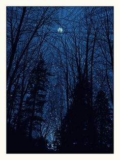 It's just the trees and the moon...