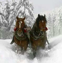 Love horses in winter.