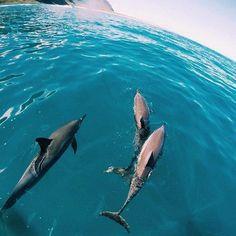 Image via We Heart It https://weheartit.com/entry/157185656 #animal #beautiful #cute #love #nature #ocean #photograph #golfinho
