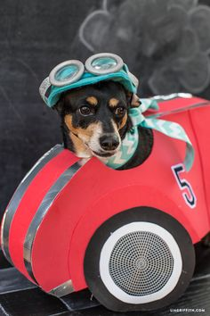 Make the best Halloween dog costume EVER with this sporty race car DIY from handcrafted lifestyle expert Lia Griffith and her team. Your pooch will love it!