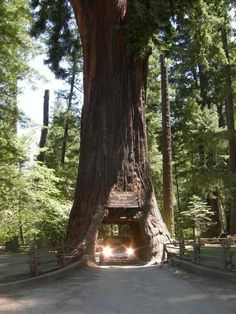 Must see the red woods again. Maybe actually camp. I will not drive through this tree again though. It was a rip-off