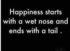 Happiness starts with a wet nose and ends with a tail.
