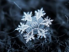 "God creates the most beautiful works of art...I can't believe these ""Macro shots"" of snowflakes. I am in awe and wonder!"