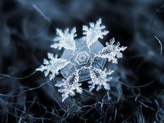 macro shot of a snowflake